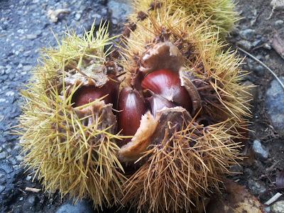 la châtaigne : Un fruit unique, bon pour la santé