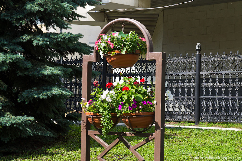 Цветы Саранска. День города в Саранске