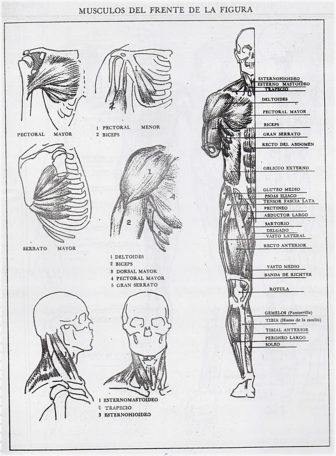 Cómic en Fuentes: Nociones básicas de anatomía III