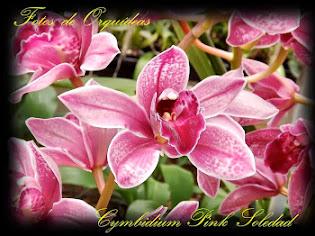 Fotos de orquídeas. Album nº-5