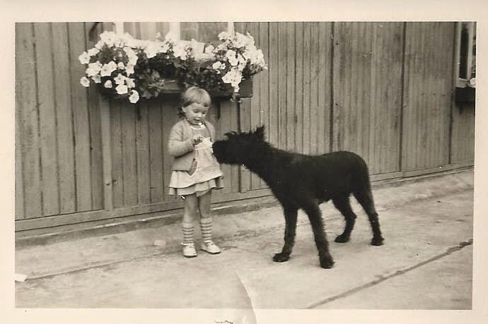 Meine erste Begegnung mit Hunden