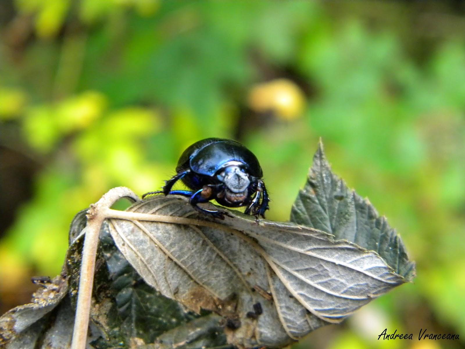 frunză, pădure, insectă