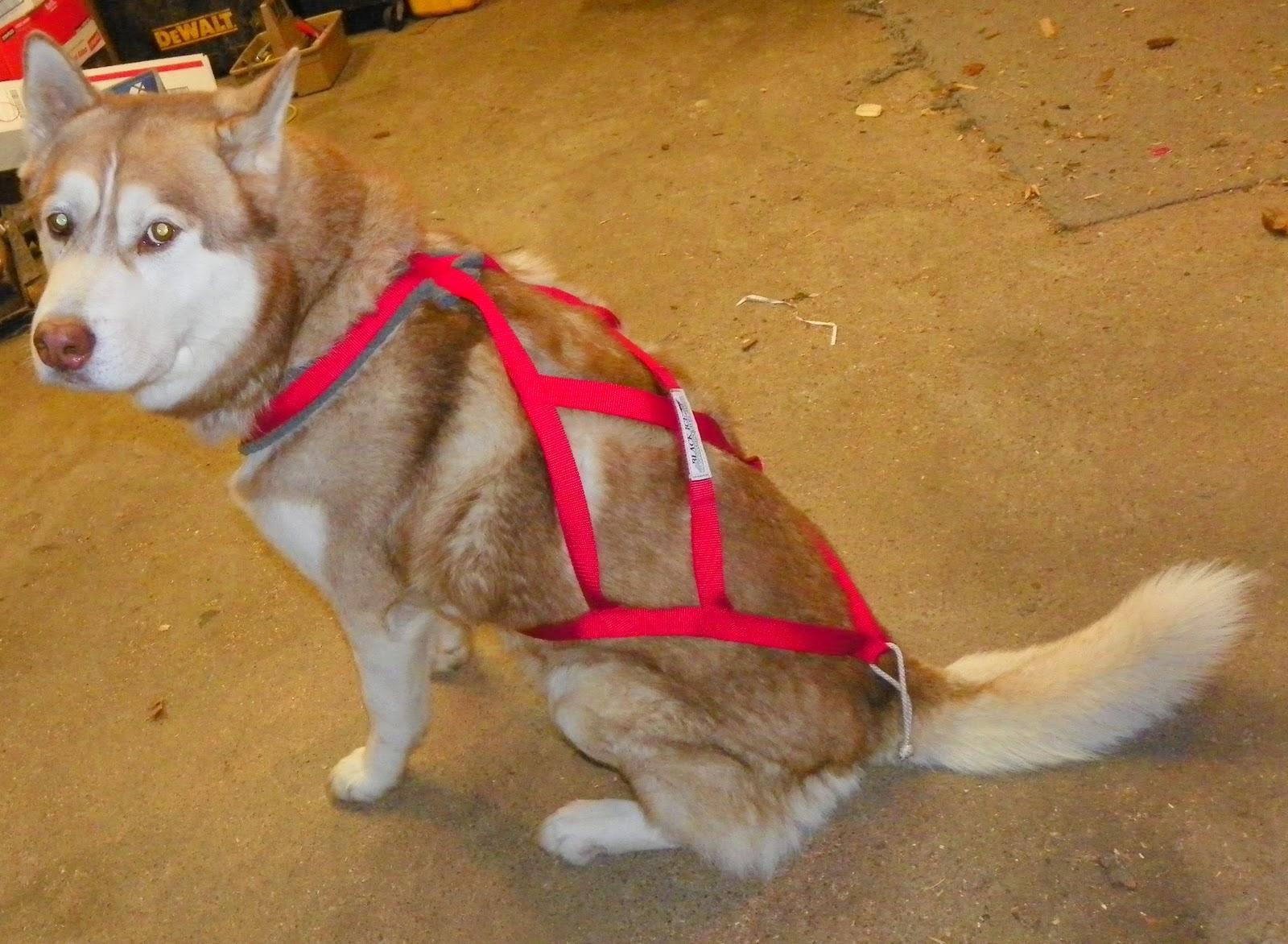 Best Dog Mushing Harness