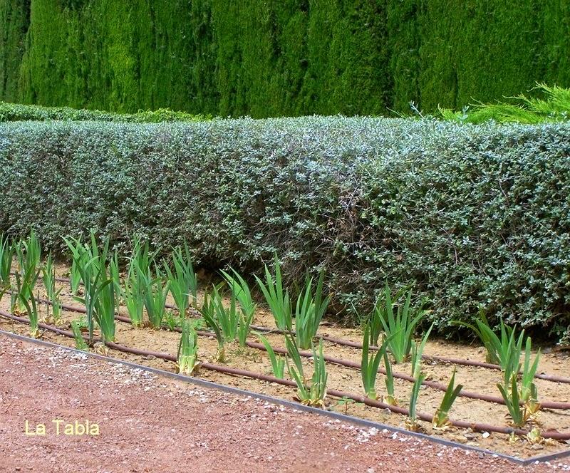 El jard n de las hesp rides las ninfas del atardecer for Jardin hesperides