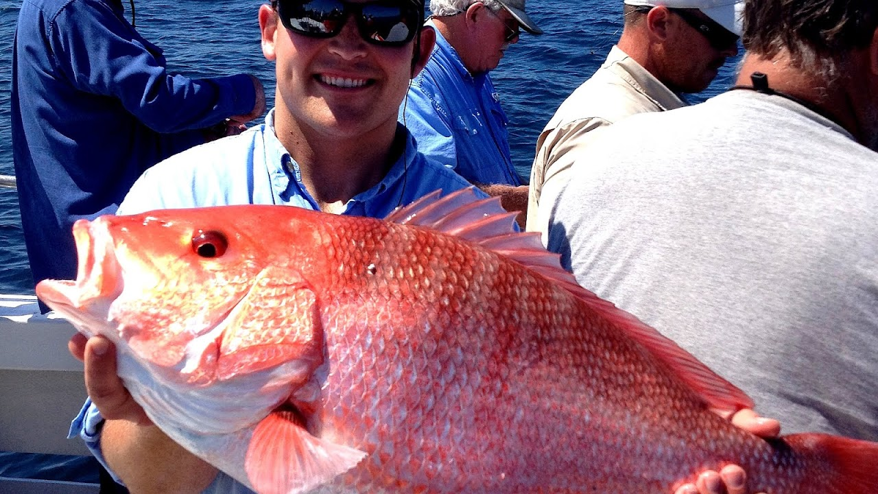 Northern red snapper American