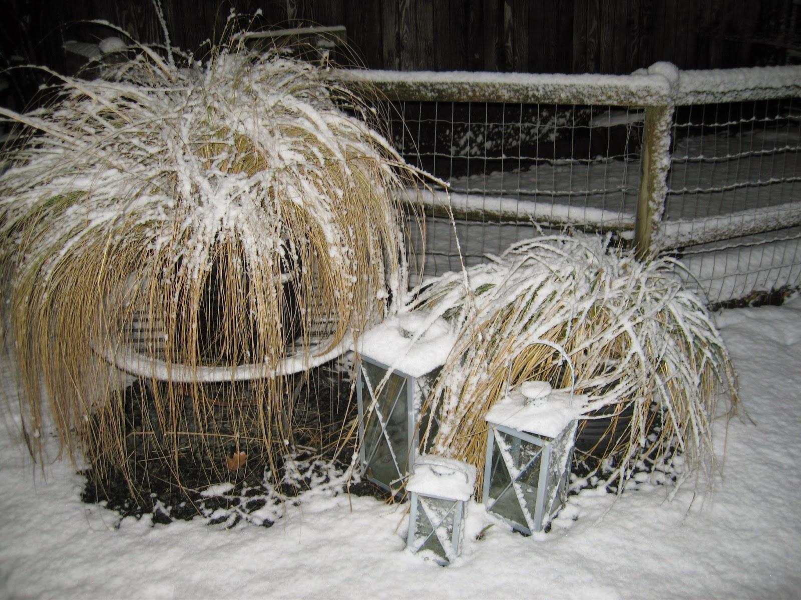 Blomstert sens have vinterpynt for fattigr ve - Lade bz ...