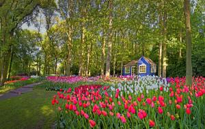 Keukenhof Gardens, Belanda