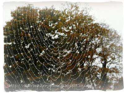 mist on spiders web