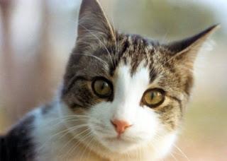 Woow..ternyata Kucing Bisa Tahu Kapan Seseorang Meninggal [ www.BlogApaAja.com ]
