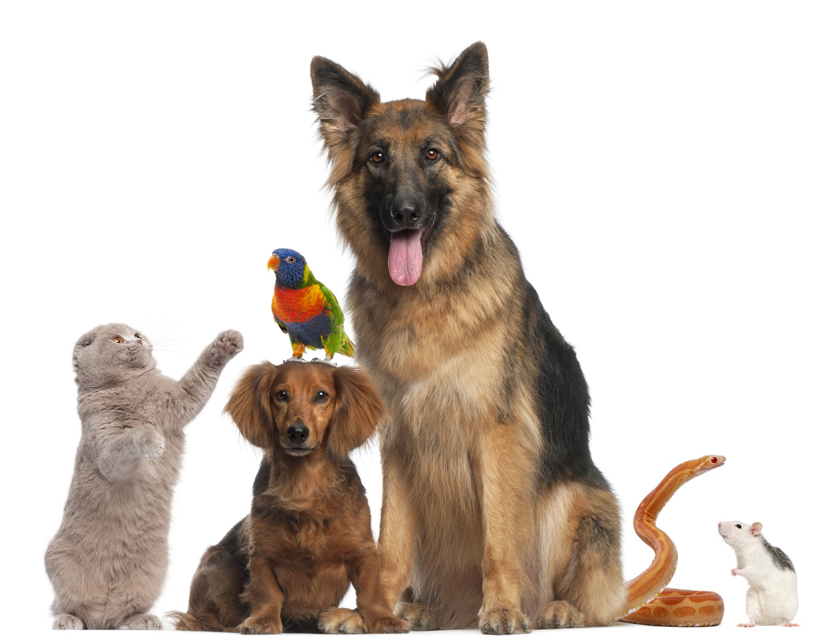 9 Reasons You Should Definitely Adopt a Pet - Goodnet