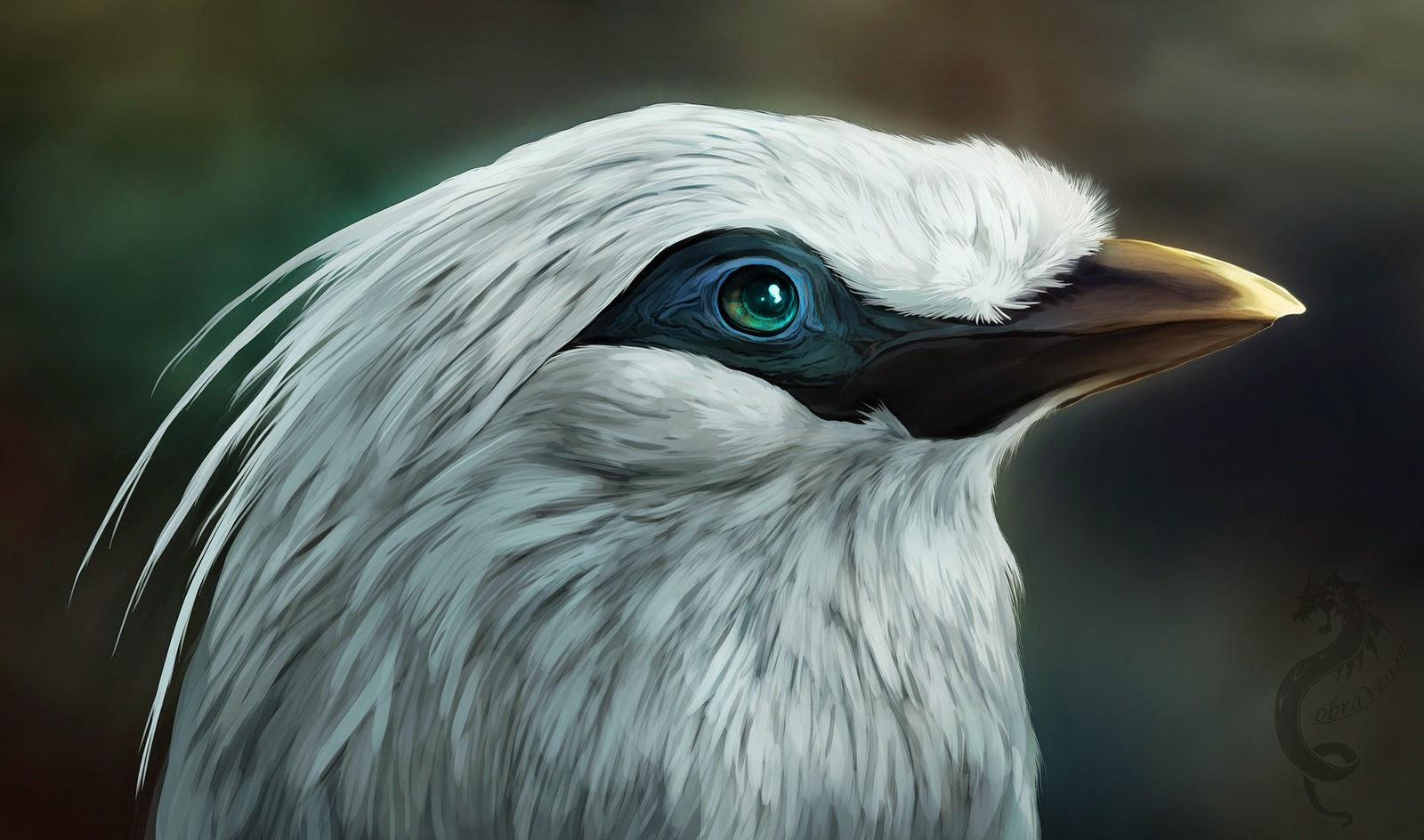 Foto Burung Jalak Bali Terbaik