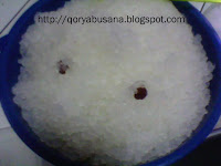 Merawat Alga Kristal Jepang