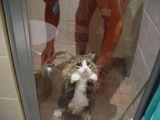 kedilerin duş alması