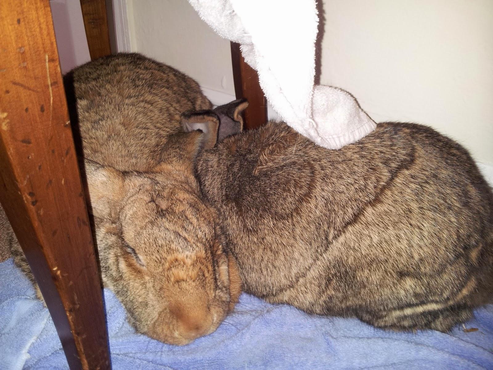 the bunny hut social life of bunnies bonding losing mates