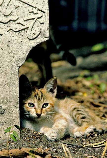 Mueeza, Rasulullah dan Hadist Tentang Kucing