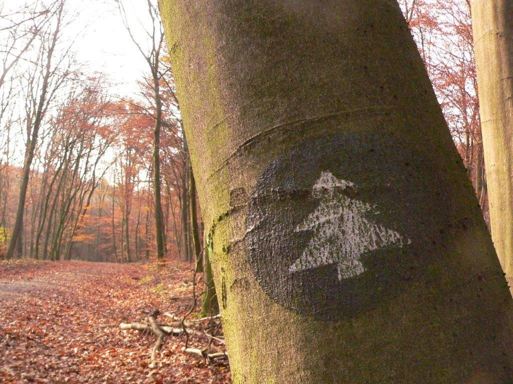 Spaziergang Winter Kalt Hund Wochenende Tanne Baum Laub Herbst