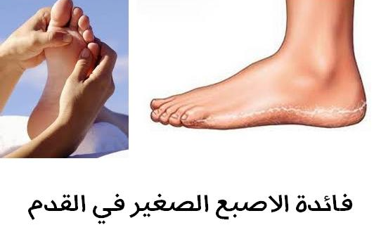 معلومة خطيرة يجهلها 99% من الناس ما هى فائدة الصبع الصغير فى القدم ؟؟ مصيبة أذا تجاهلت هذه المعلومة