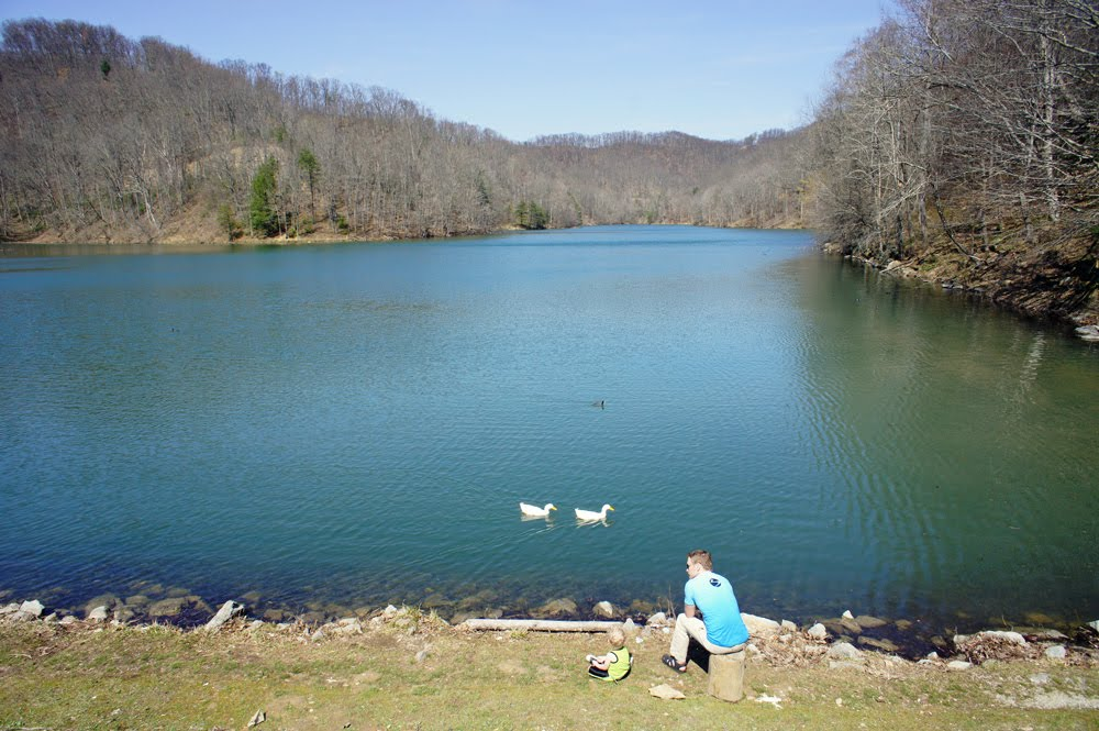 The weather this week has been absolutely beautiful so for Freshwater pond fish