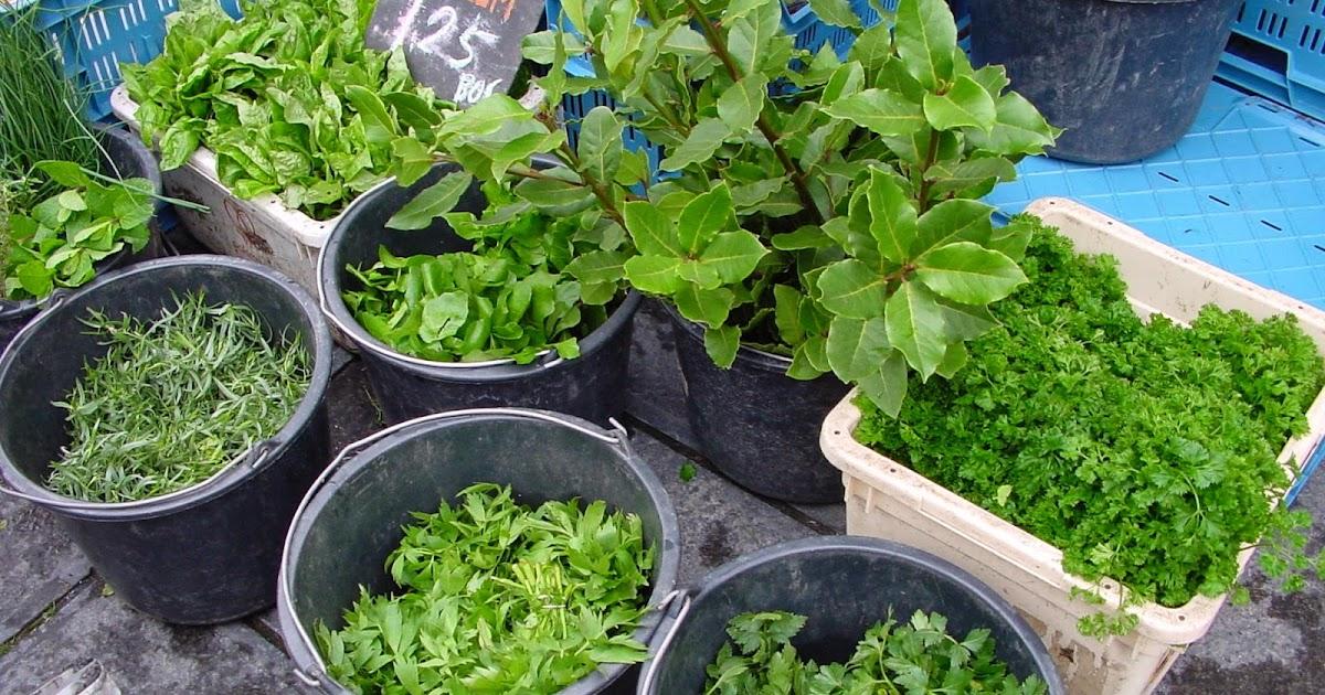Jardineria eladio nonay hierbas arom ticas jardiner a - Jardineria eladio nonay ...