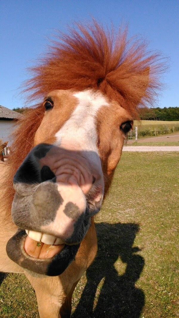 Funny animals of the week - 5 April 2014 (40 pics), horse with funny hair and face
