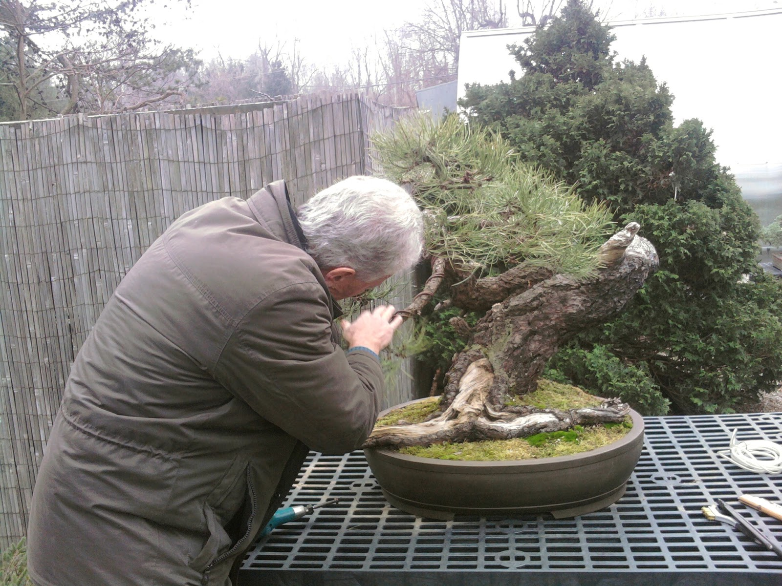 Yorktown Bonsai Walter Pall Bonsai Academy Natures Way Nursery
