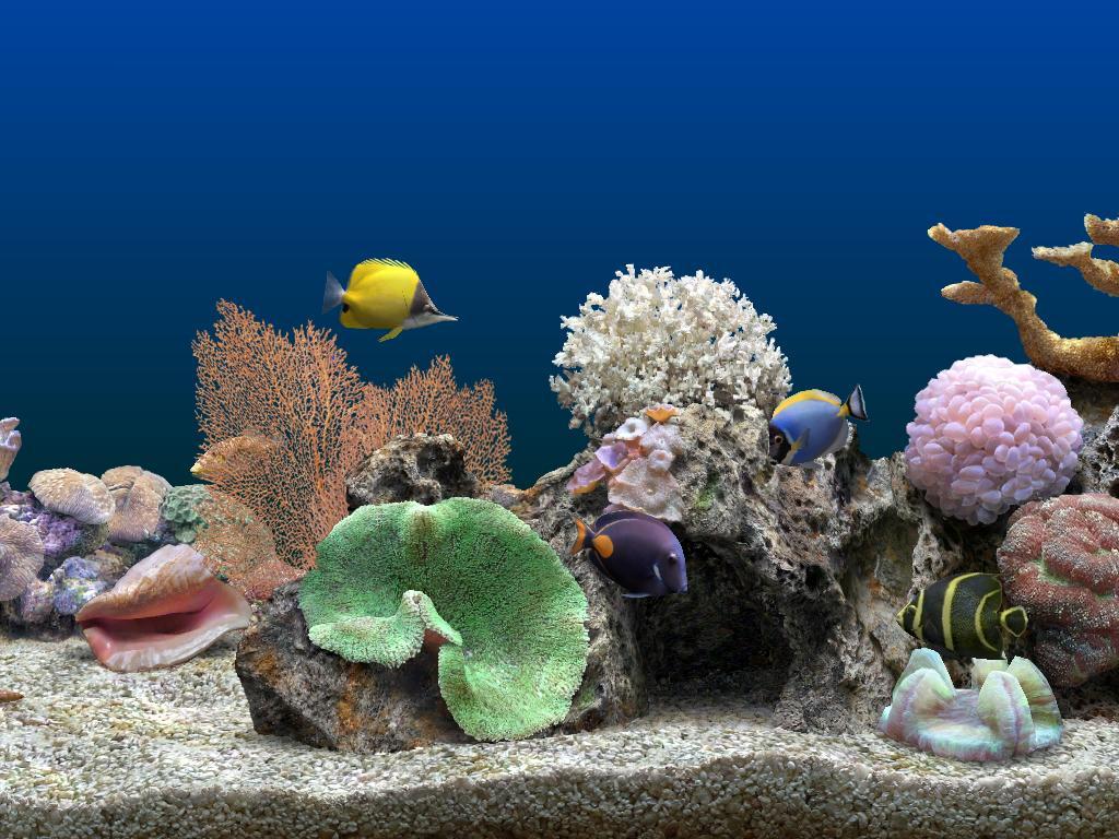 Serenescreen marine aquarium lite download free mokisspres for Marina aquarium