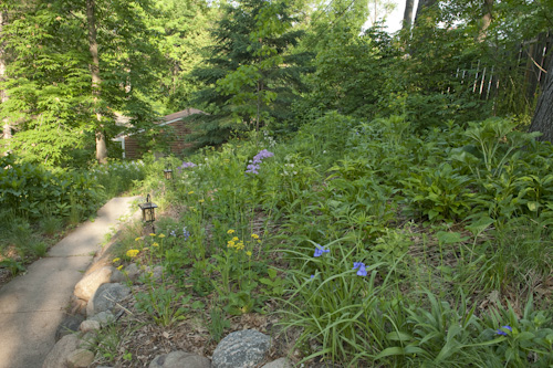 Landscaping A Sunny Hillside : Sunny southwest hillside of prairie species may