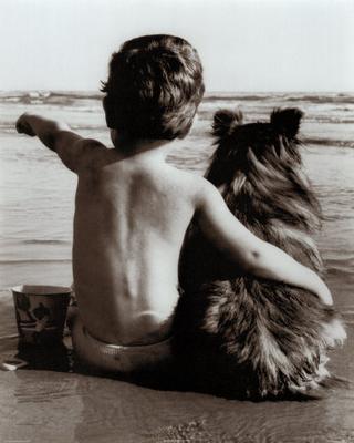 ¿porque el perro es el mejor amigo del hombre? Perro-playa