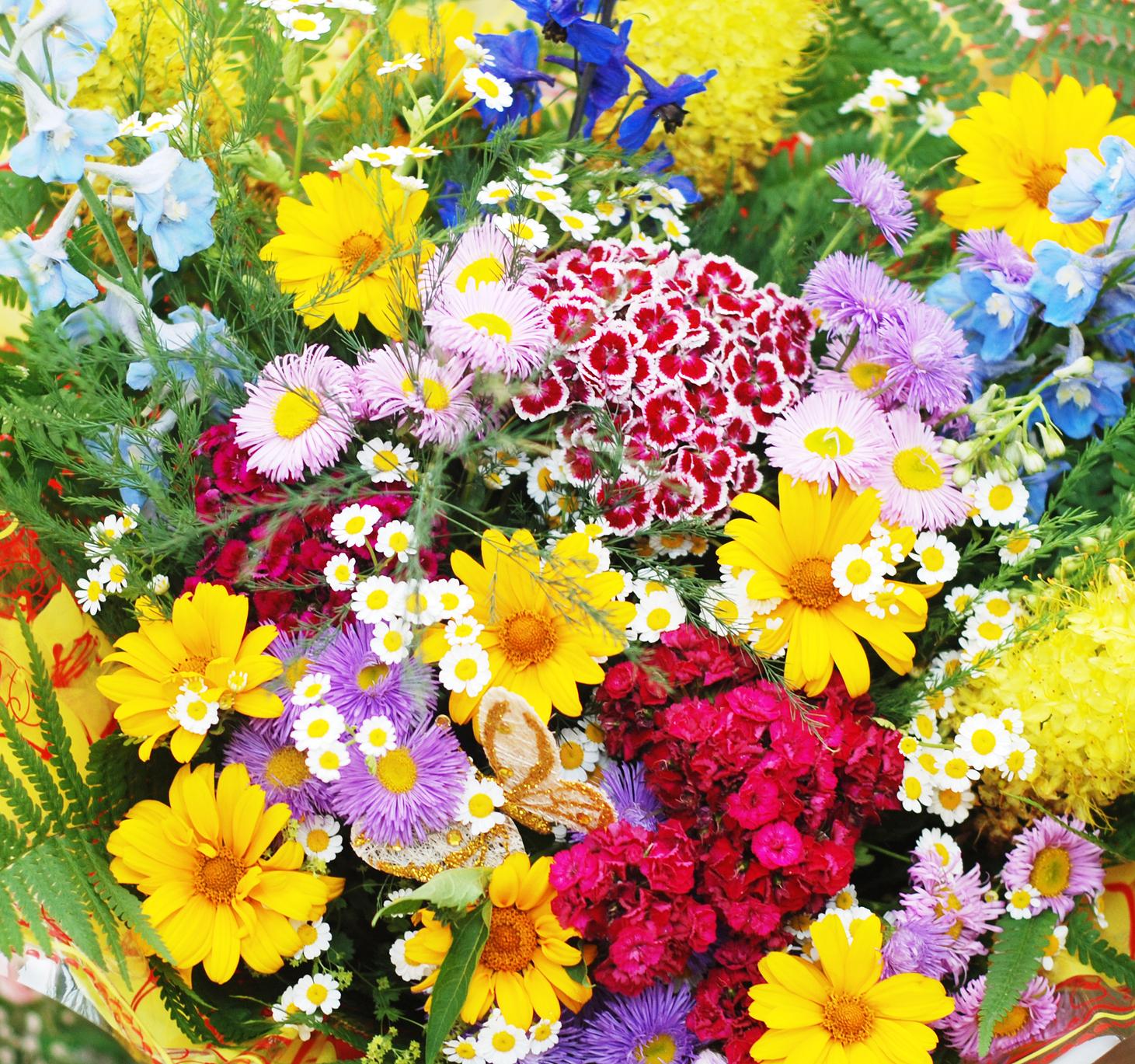 fotografias de paisajes de flores Fotografias y fotos para  - Fotos De Flores Multicolores