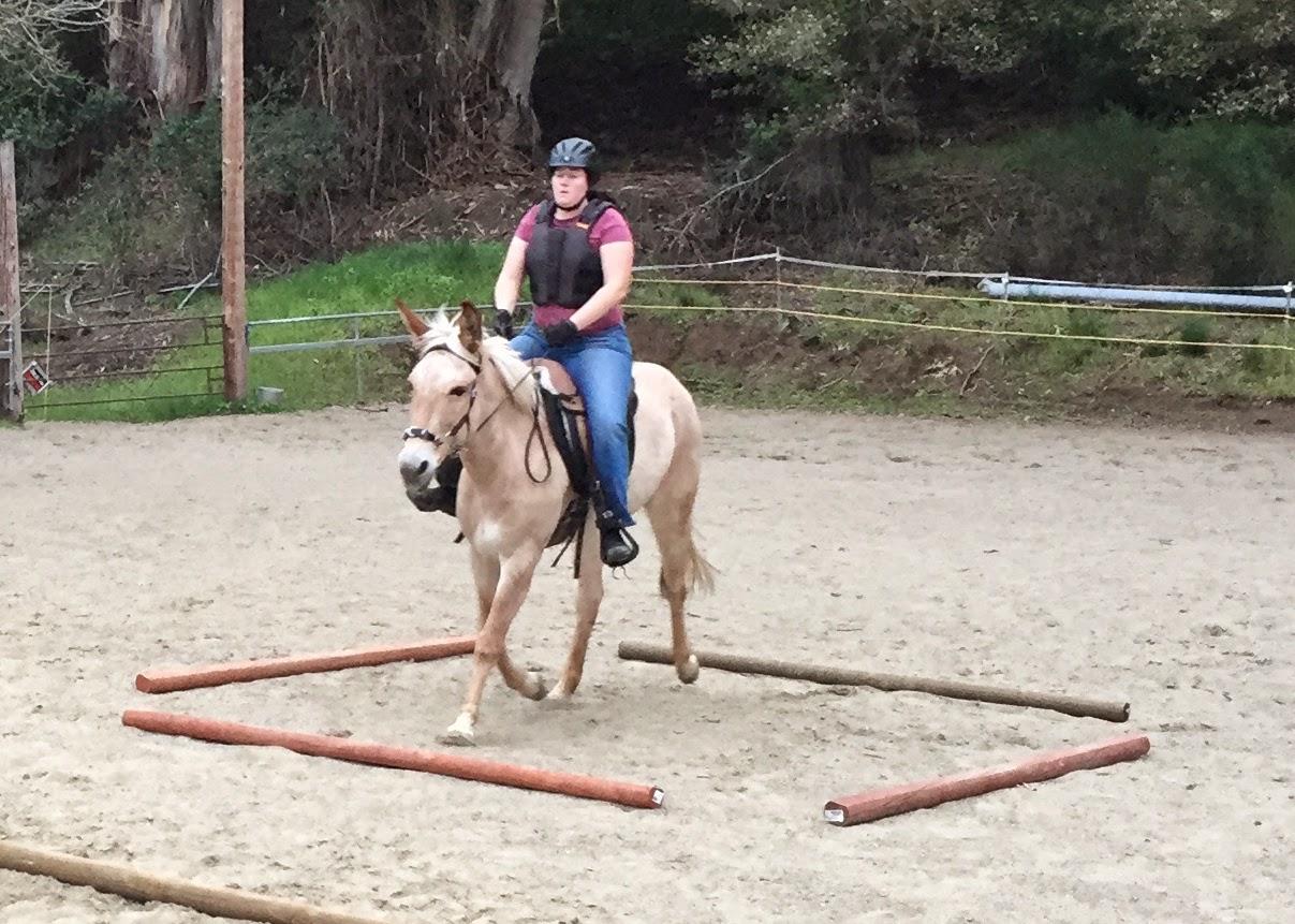 mule trotting poles treeless saddle