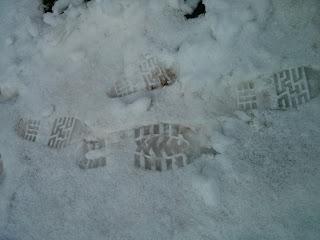 snowy prints