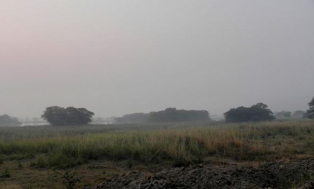 Birding near Delhi