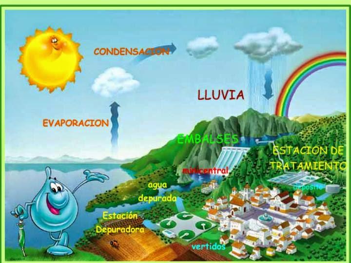 http://misegundoaprendiz.blogspot.com.es/2014/01/juegos-y-actividades-sobre-el-ciclo-del.html