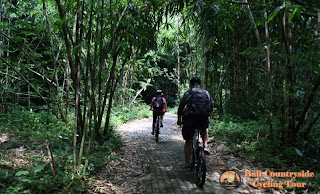 Couple Riding in Bamboo Forest - Bali Countryside Cycling Tour Tracks