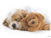 Posted by Vinda Ho t Labels: cute dog