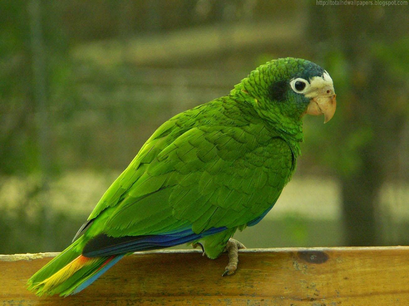 Beautiful desktop hd wallpapers 1080p amazon parrot hd for Amazon wallpaper