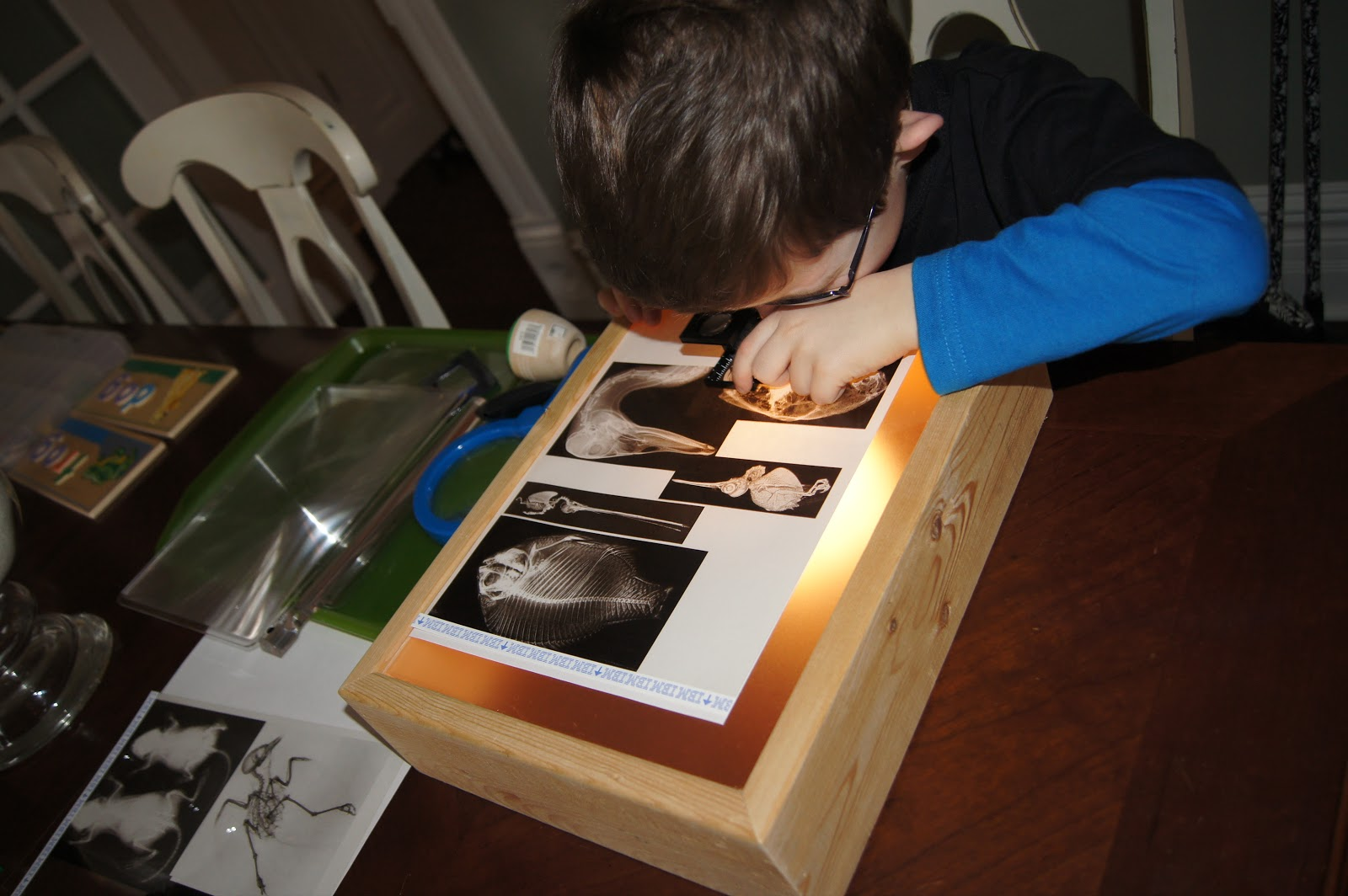 Diy Light Box Amp X Rays Science For Kids At Home Quot Making