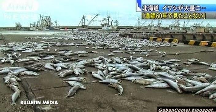 Fenomena Pelik Ribuan Ikan Sardin Terdampar di Pantai Jepun.