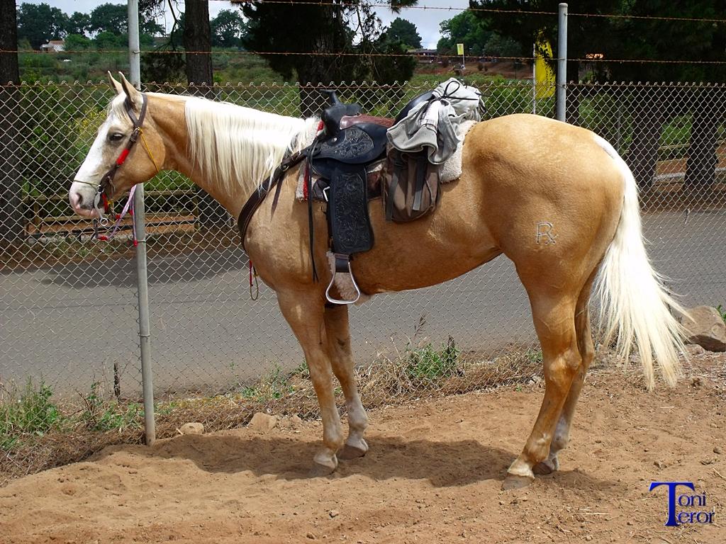 El reflejo de mi mirada caballo con montura for Monturas para caballos