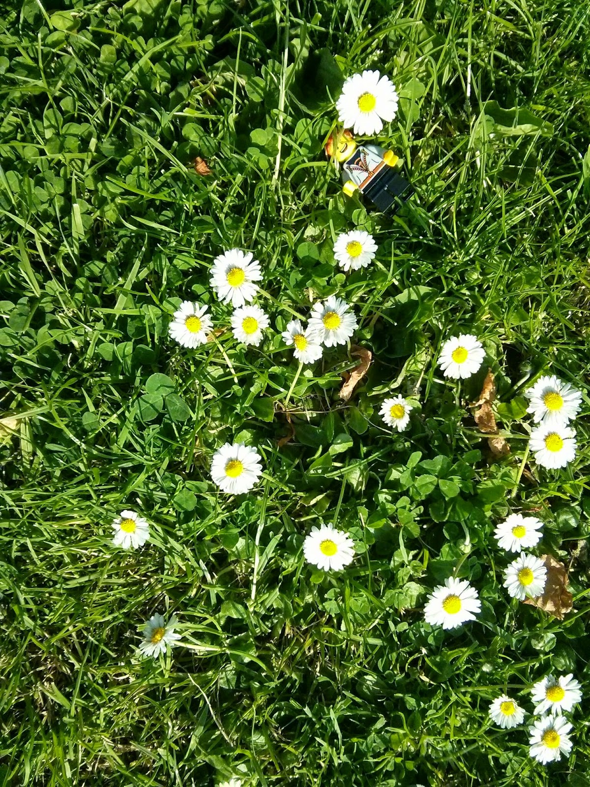 Kyle Emmett laying down in a field of Daisies