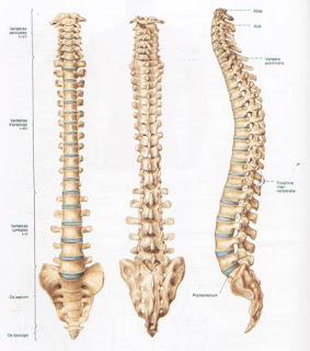 Nursing Diagnosis Interventions Herniated Nucleus Pulposus