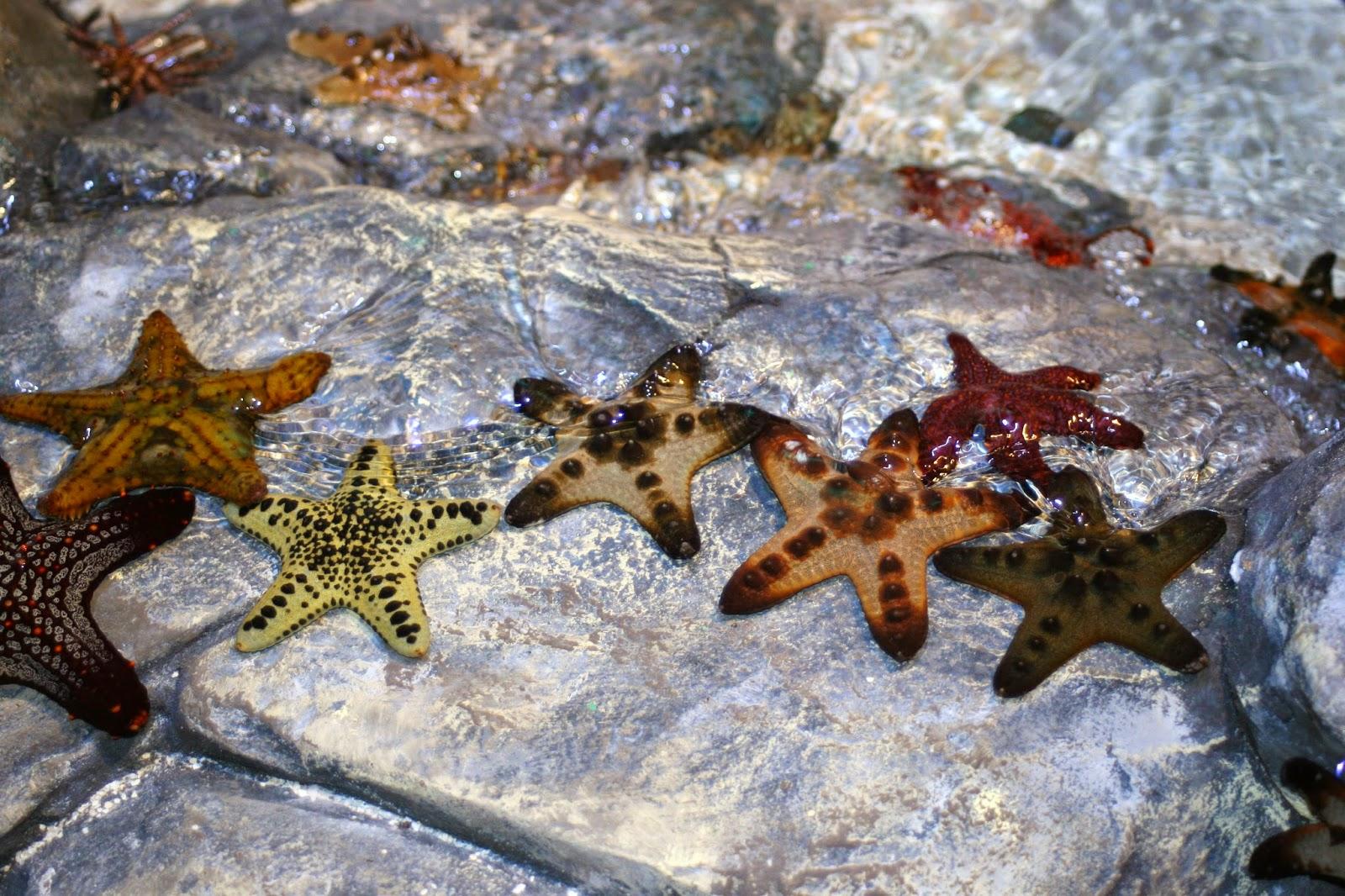 Sea Life, Aquarium, Great Lake Crossing, Michigan, Grand Opening, Sea,