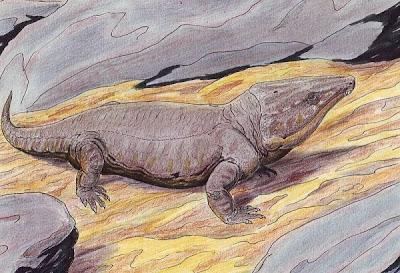 reptiles primitivos Labidosaurikos