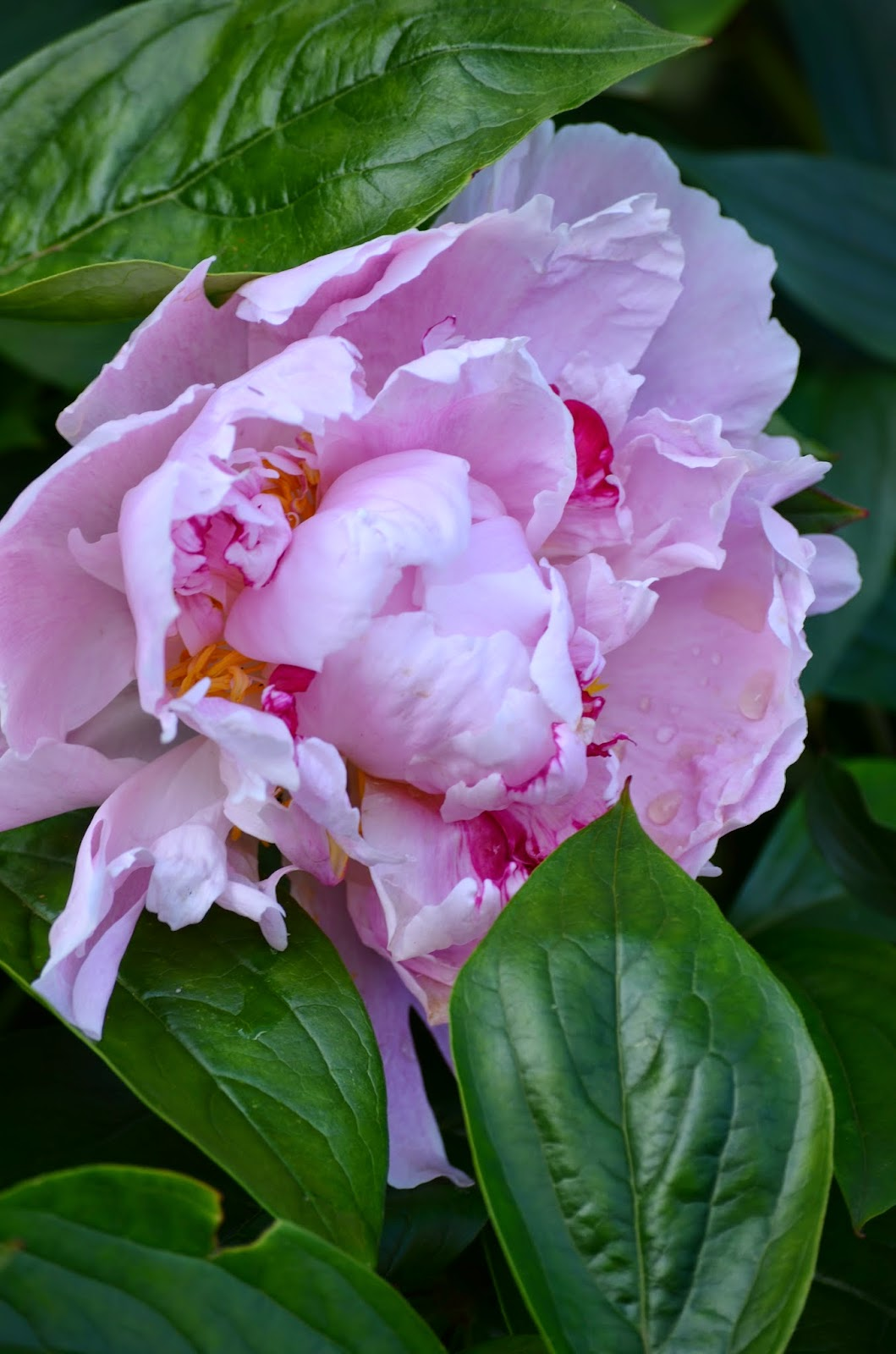 Vid vätterns strand: rosa / blommig fredag