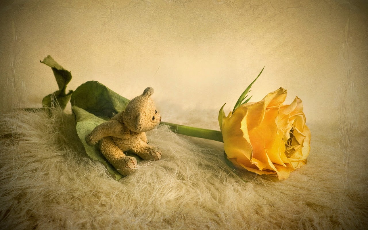 Teddy-stuck-in-love-with-yellow-rose-1280x800.jpg