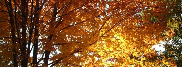 facebook sonbahar kapak resimleri+%252814%2529 Facebook Zaman Tüneli Sonbahar Manzara Kapak Resimleri