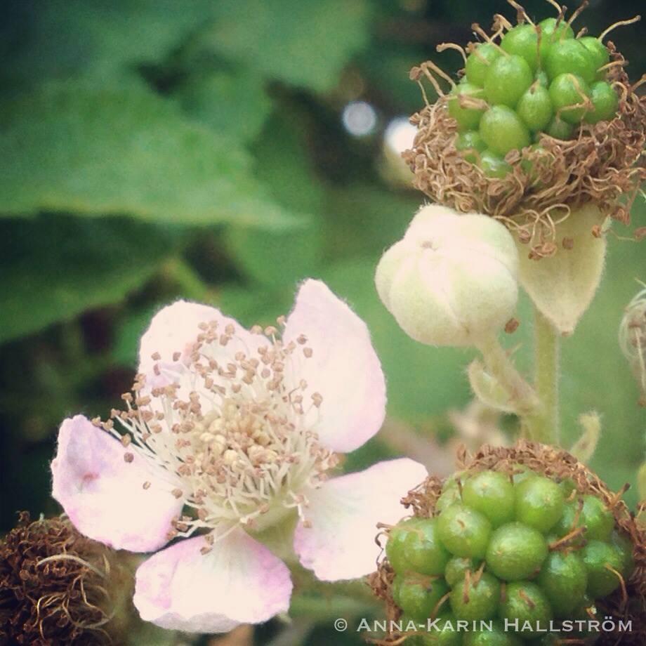 No ordinary daisy pysselblogg: vår trädgård, etage 1   entrén.