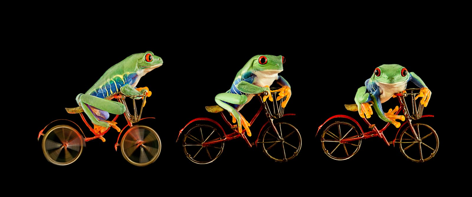 FrogScapes