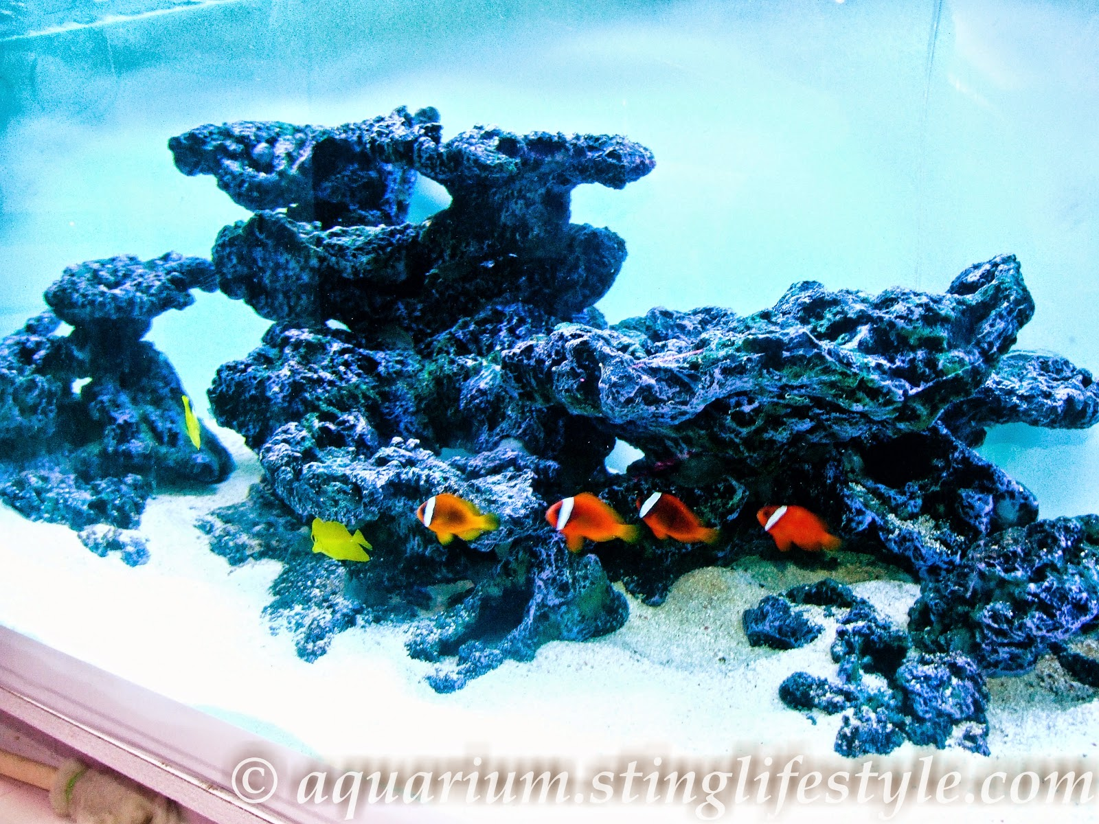 ... Marine Aquarium Photos 7 Ft Bespoke Aquarium. on aquarium sump setup