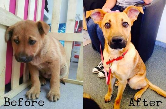 perros adoptados antes y despues felices